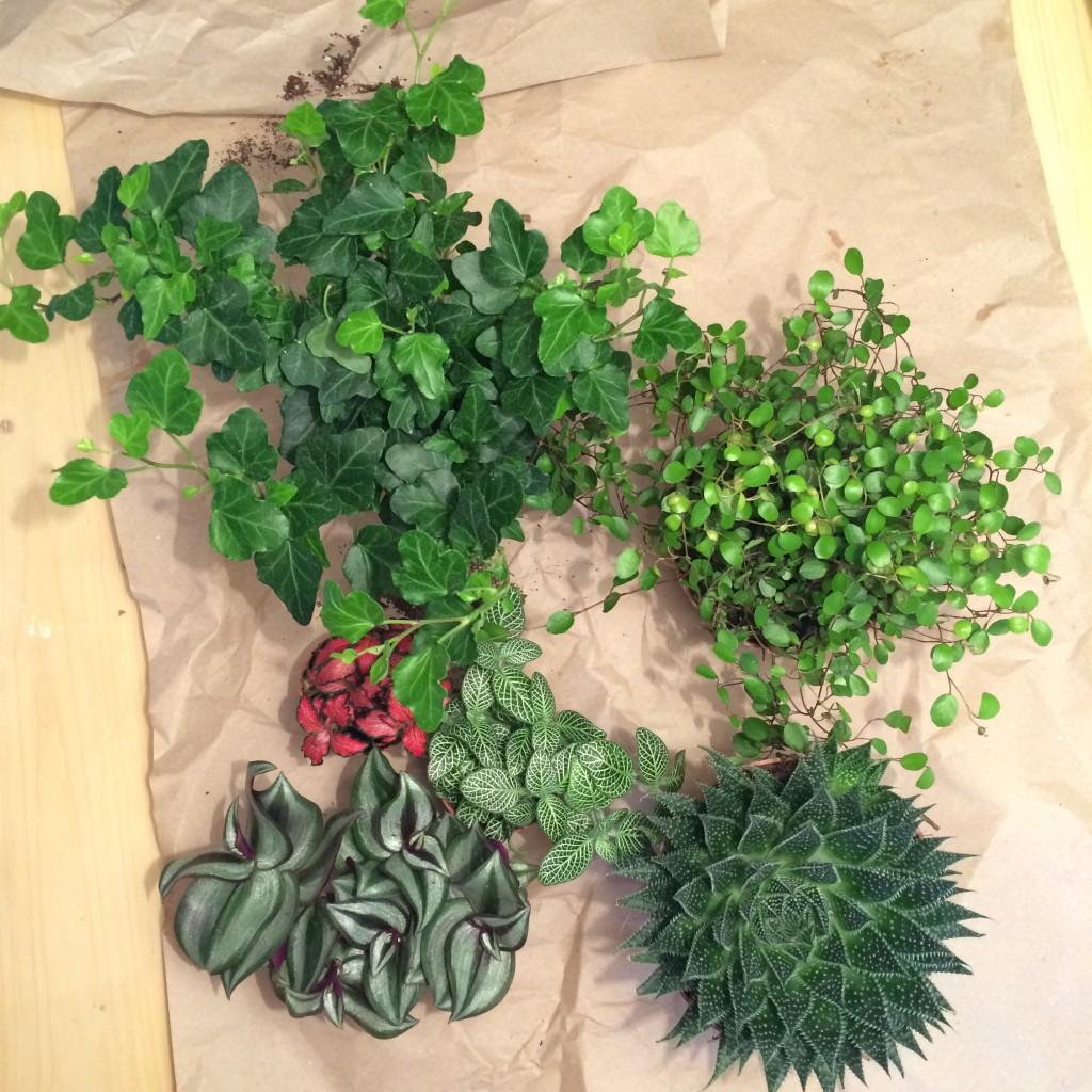 Bild ovanifrån på alla växterna.